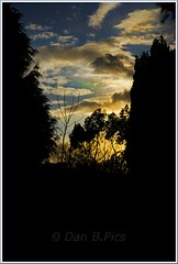 Evening  Silhouette's--. (Dan B. Pics.) Tags: spring sunsetting eveninggardenviewlate