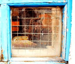 Antiques II. (Rushie.) Tags: colour window antiques morecambe dirtywindow throughthewindow antiqueshop rushie unkept laurarushrivoire refectlection morecameantiqueshop