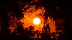Blistering Sunset (Jim Mullhaupt) Tags: pictures camera pink blue sunset red wallpaper sky orange sun color tree weather silhouette yellow clouds landscape photography gold evening photo nikon flickr sundown florida dusk snapshot picture palm exotic p900 tropical coolpix bradenton geographic endofday cloudsstormssunsetssunrises nikoncoolpixp900 coolpixp900 nikonp900 jimmullhaupt