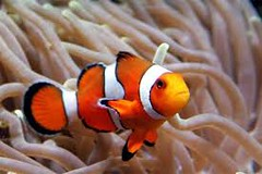 (noralaaeon1) Tags: egypt is characterized by an extensive coastline along red sea coast coral reefs magnificent colorful fish features purely water purity transparent we can enjoy snorkeling watching beautiful people ourselves