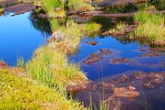 tőzegláp / muskeg (debreczeniemoke) Tags: nyár summer láp bog tőzegláp muskeg tăulchendroaiei tó pond kék blue tópart lakeside gutinhegység gutinmountains olympusem5