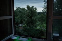 (ziemowit.maj) Tags: abundance canon5dmkiii ef35mmlf14 eveninglight flat flora greenplasticbagonthewindwsill home london nature overgrowth parkseenthroughtheopenwindow