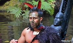 Maori Warrior, New Zealand (mary fly) Tags: maori culture face tattoo ta moko new zealand warrior human people around world rotorua