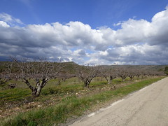 route du Lubron (thiery49) Tags: lubron route road fruitier arbre nuage tree cloud