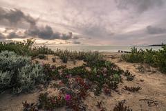 In the grasses (mattsecombe) Tags: nikon d750 landscape beach water seascape beauty australia southaustralia victorharbor amazing clarity sand sea clouds