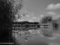 The lonely angler. (MAMF photography.) Tags: angling aldbrough aldbroughleisurepark aldbroughcaravanpark blackandwhite blackwhite britain bw biancoenero beauty blancoynegro blanco clouds england enblancoynegro eastyorkshire eastcoast flickrcom flickr fishing fisherman google googleimages gb greatbritain greatphotographers greatphoto hull hu11 inbiancoenero image lake mamfphotography mamf monochrome noiretblanc noir negro north photography pretoebranco photo panasoniclumix panorama panoramic schwarzundweis schwarz summer sky uk unitedkingdom upnorth water wet yorkshire zwartenwit zwartwit zwart nature