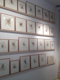 Sara Landeta - Galería 6mas1