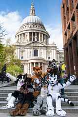 LF20150425-5142 (Mikepaws) Tags: city london fun furry tiger canine social stpaulscathedral fandom meet cityoflondon fursuit 2015 furryfandom fursuits furmeet londonfurs mikepaws