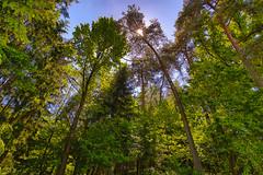 Bayerischer Wald HDR (duseppl) Tags: canon eos is mark ii 7d stm wald hdr bayerischer f4556 efs1018mm