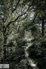 Woodland Path (Rob Felton) Tags: light reflection water woodland bedford ancient ditch path bedfordshire felton sunray hillfort localnaturereserve robertfelton scheduledmonument mowsbury mowsburyhill