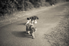 (23fumi) Tags: bw monochrome cat nikon dof bokeh cosina voigtlander  58mm nokton d600    voigtlandernokton58mmf14slii
