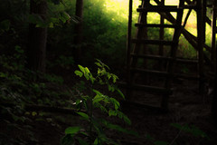 Lights (Netsrak) Tags: light shadow leaves dark de deutschland licht leaf darkness blatt bltter schatten nordrheinwestfalen dunkel dunkelheit rheinbach