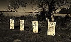 Grant's relatives? (BillsExplorations) Tags: old monument cemetery grave graveyard sepia vintage illinois familyhistory grant president civilwar ancestor hero gravestone marker historical memorialday eaglepoint usgrant relation
