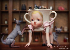 Surround me with sweetness (pure_embers) Tags: uk cats pets cute cup girl doll dolls play tea bjd sphynx pure porcelain embers hajju haju domadoll pureembers bjdpets hajjucup