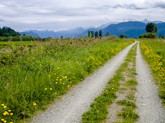Running along the Slough (Scrambler27) Tags: ca flowers trees canada mountains clouds landscape path britishcolumbia running coquitlam gravel dandelions goldenears pittriver trailrunning debovilleslough nokiaphoto