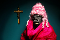 The Melancholic Ape who Loved Pink (Studio d'Xavier) Tags: pink gorilla ape 365 strobist werehere 198366 july162016 incurablemelancholia