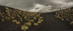 the volcano flowers (rinogas) Tags: rinogas italy sicily nicolosi etna volcano