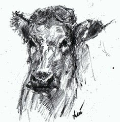 "Portrait of ""Trudy"" (Andr van der KAAIJ) Tags: trudy cow"