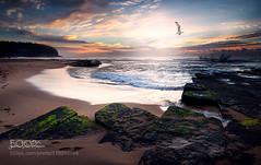Lone Ranger (hammockbuddy) Tags: ifttt 500px sky sunrise sea bird beach sun light clouds ocean rocks green seagull beatiful australia moss sydney