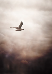 There's no looking back from here (Ans van de Sluis) Tags: sky clouds ansvandesluis seagull landscape serene serenity bird fly forward heaven art