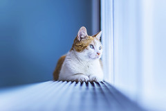 Blue (felicefelines) Tags: nero cat pet animal blue heating 50mm 2016