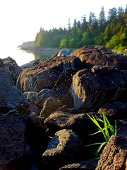 Bridget Cove Camp (Umnak) Tags: alaska backpacking tongassforest