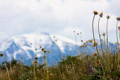 Wild Flowers (judd.furlong) Tags: