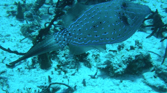 Gorgeous Fish in Cozumel