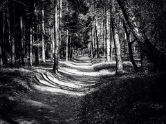 Nature in the Netherlands, high contrast black and white (Paul Albers - Creativity) Tags: nature netherlands creativity paul nederland natuur zwart wit albers haarle 500px ifttt wwwpaulalberseu