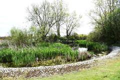 DSC_1183 Calcot (PeaTJay) Tags: flowers trees plants macro nature water gardens fauna outdoors reading flora lakes parks micro closeups ponds berkshire bushes calcot tilehurst nikond750