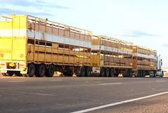 Queensland Roadtrain (Arthur Chapman) Tags: truck transport australia queensland roadtrain longreach btriple geo:country=australia geocode:method=gps geocode:accuracy=100meters