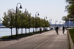 Marilyn Bell Park (jer1961) Tags: park trees toronto bikepath cyclist waterfront lakeontario rowoftrees marilynbellpark cyclingintoronto