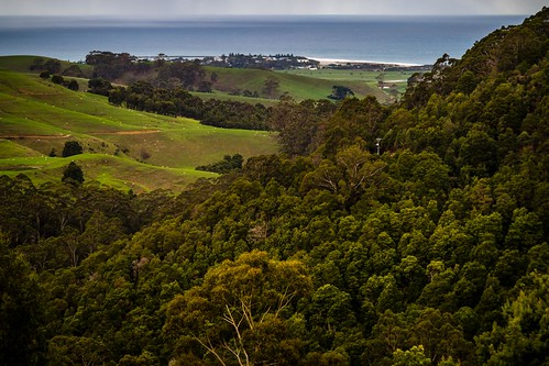 Apollo Bay Hills-4