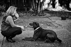 melissa and hunter (fallsroad) Tags: portrait blackandwhite bw woman dog melissa servicedog labradorretriever hunter seizureresponsedog nikond7000