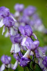 purple (1 of 1) (JiBs.) Tags: nikon highpark purple d610