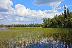 FIN_185 - Pyh-Luosto (Viaggiatore Fantasma Summer Tour 2016 - CH-LI-AT) Tags: canon 5d finlandia finland suomi lapponia lapland lappland pyhluosto parco nazionale national park nationalpark