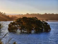 Mangrove submersion I (elphweb) Tags: ocean water seaside australia mangrove hdr