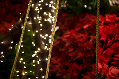 Christmas Sectional (ahockley) Tags: christmas christmaslights lasvegas lights nevada night poinsettias