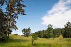 lichte Pinienwaldlandschaft (EbsEls) Tags: bulgarien bg