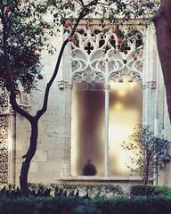 ghost  #window #light #silhouette #gothic #garden #architecture #trees #orangetree #llotjadelaseda #lonjadelaseda #valencia #spain #silkexchange #unesco (.taz.) Tags: instagramapp square squareformat iphoneography uploaded:by=instagram valencia spain silkexchange llotjadelaseda lonjadelaseda window gothic architecture trees orangetrees