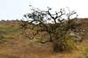 Lomas de Lachay 08 - Perú (Hernán Horacio) Tags: naturaleza peru nature nikon lima paisaje perú nacional lomas reserva lachay d5000 peruvianimages
