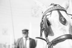 Feria 2015 (ismaelmolinadiaz) Tags: street horse luz caballo sevilla pareja feria sombrero baile portada fuegos roja caseta carruaje