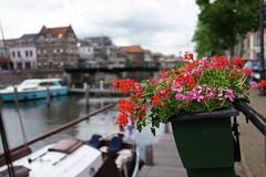 Flower pot(s) (avista) Tags: flower colors dof harbour sony nederland thenetherlands pot linge gorinchem rx1 bloembak