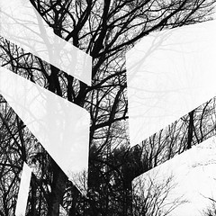 trees (itawtitaw) Tags: white abstract black tree 120 film lines silhouette architecture contrast analog square diy blackwhite shadows doubleexposure stairwell scan multipleexposure bronica epson sw hp5 shape schwarzweiss ilford 80mm id11 v700 sqai zenzanonps80mm28