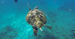 Similan Adaları (gezgincift) Tags: thailand similan similanisland khaolaklanddiscovery similanadası divinginsimilan