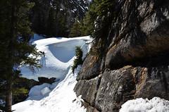 Below Lake Agnes (Bracus Triticum) Tags: lake canada spring alberta april below agnes 2016 四月 4月 カナダ uzuki 卯月 shigatsu アルバータ州 unohanamonth 平成28年