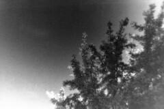 16-010_030 (gyjishukke) Tags: monochrome analog noiretblanc minoltax700 hc110 delta3200 arbre ilford 32 contrejour selfdevelopment feuillage dilb believeinfilm shootfilmnotmegapixels numerisationpourlecture ie1600iso
