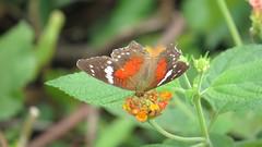 pretty flower & butterfly