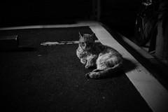 cat (Typ250) Tags: leica schneiderkreuznach m240 leicam typ240 xenonf2f5cm