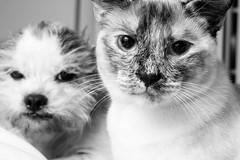 Pets (Secgeek06) Tags: animals xpro2